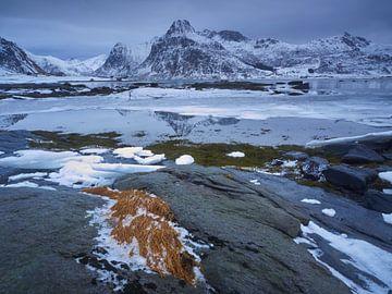 Geel gras in de besneeuwde wereld von Henk Goossens