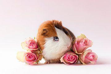 Cavia Archie tussen rozen van