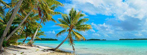 Hangende palmboom op een tropisch strand in de Stille Oceaan in panorama van