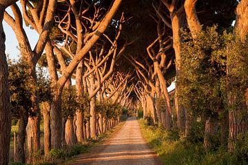 Tuscany Avanue von Laura Vink