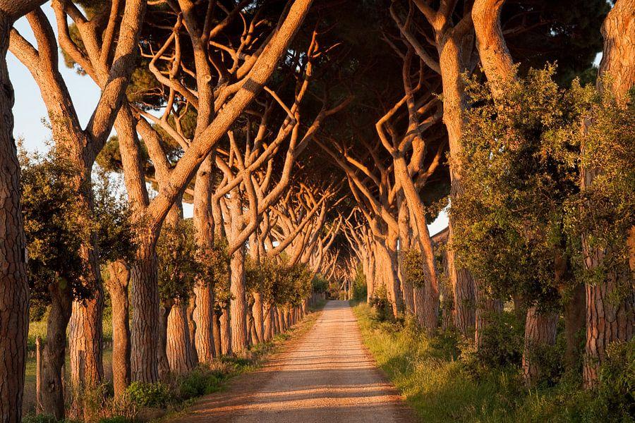 Tuscany Avanue van Laura Vink