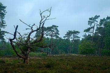Nationaal Park Utrechtse Heuvelrug van Maarten Verhees