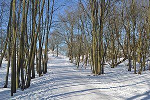 Sneeuwlandschap in de Amsterdamse Waterleidingduinen