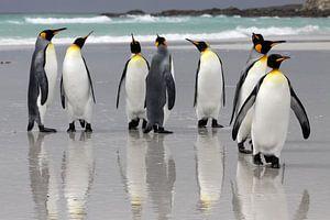 Koningspinguïns op het strand