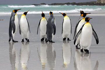 Koningspinguïns op het strand von Antwan Janssen