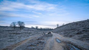 Winter op de Posbank van Michael Fousert