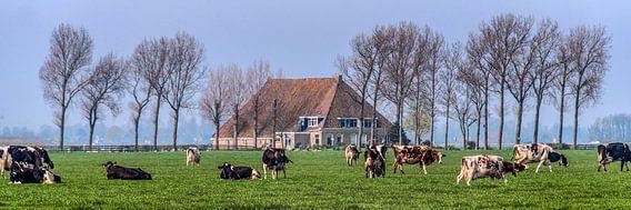 Boerehoeve op t Friese platteland met het vee op de voorgrond. van Harrie Muis