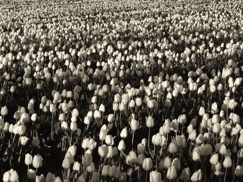 Hollands tulpenveld van Jessica Berendsen