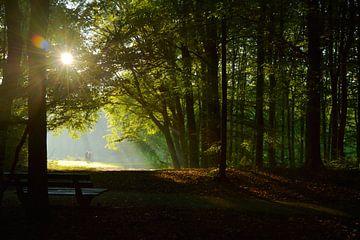Vroege joggers in het Haagse bos, Den Haag, Nederland van Christa Thieme-Krus