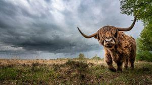 Schotse Hooglander en slecht weer op komst! van Martijn van Dellen