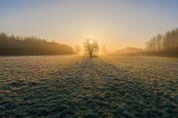 Een magische ochtend in het bos