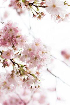 Frühlingsgefühle von Lisa Becker