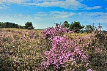 Heide  von Willem van Leuveren Fotografie