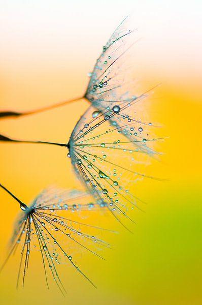 Waterpaint van Andrea Gulickx