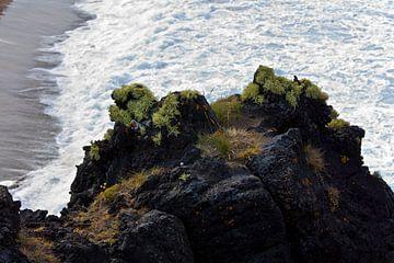 Kust IJsland van