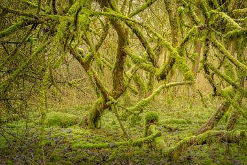 Mos bos #1 van Xander Haenen