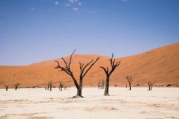 Woestijn in Namibië sur