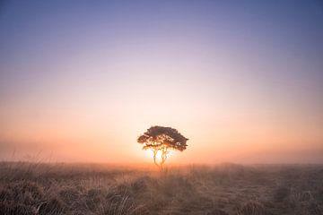 La solitude... sur Niels Barto