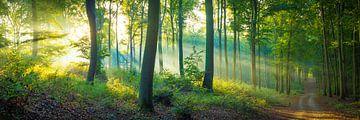 Wald Panorama von Martin Wasilewski