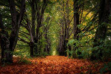 Herbstgasse van Vladyslav Durniev