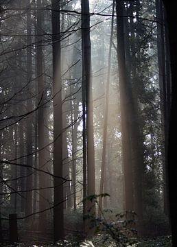 Sonnenlicht im Wald, am Morgen... von Anke Winters