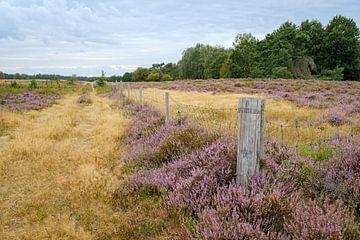 Heide op Tenhaagdoornheide van Johan Vanbockryck