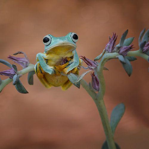 Mooie kikker aan het relaxen sur