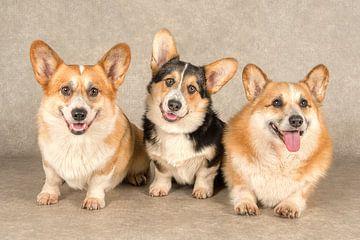 Welsh Corgi honden van Tony Wuite