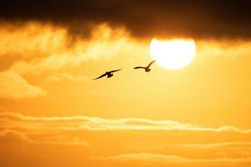 Der Sonne entgegenfliegen von Marjan Slaats