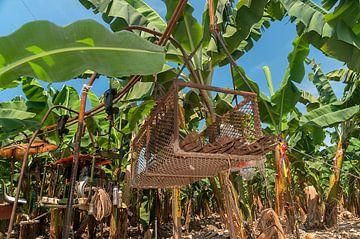 Los Amates: Bananenplantage von Maarten Verhees