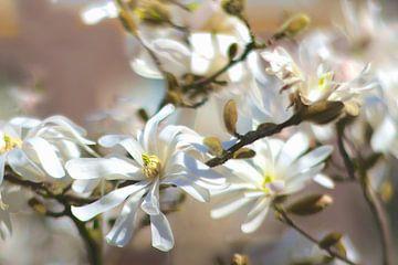 Japanse Magnolia von Marianna Pobedimova