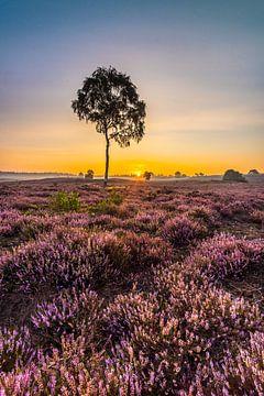 Gloire matinale sur la lande sur Eelke Brandsma