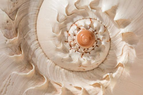 schelp spiraal