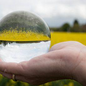 een koolzaadveld in een glazen bol van Compuinfoto .