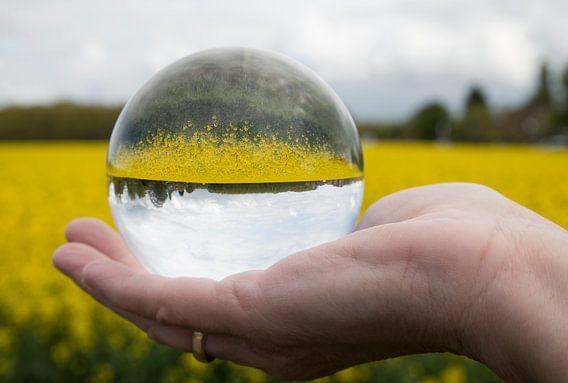 een koolzaadveld in een glazen bol