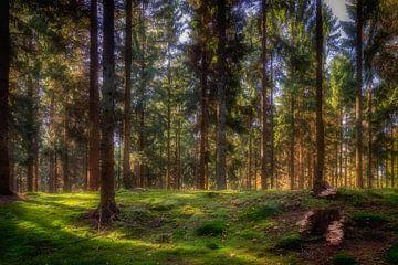 Forest von Bart Hendrix