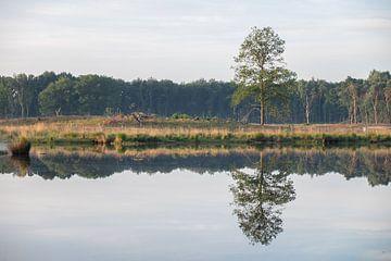 Wasserspiegelung von einem einsamen Baum im Frühling. von FHoo