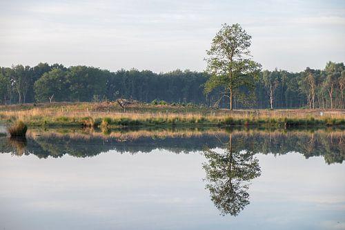 water reflectie van een solitaire boom in de lente.