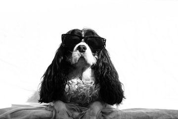hond met zonnebril van