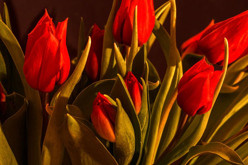 Red tulips van Michael Nägele