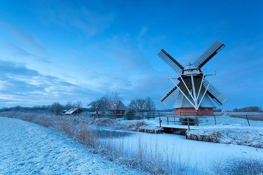 Dutch beauty