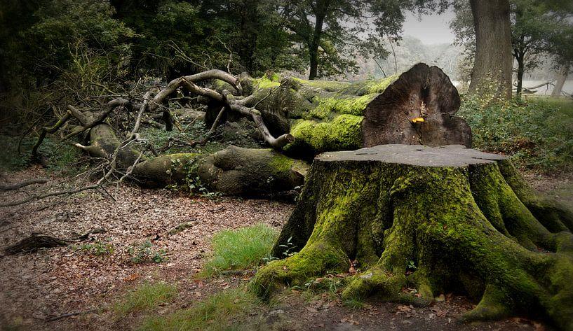 Whispering  Wood van C.A. Maas