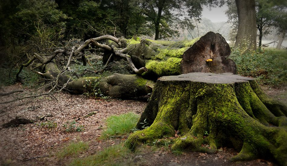 Whispering  Wood