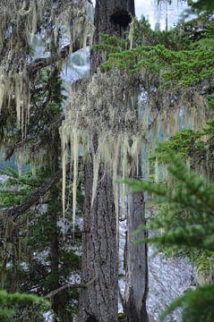 Spook boom van Marcel Schouten