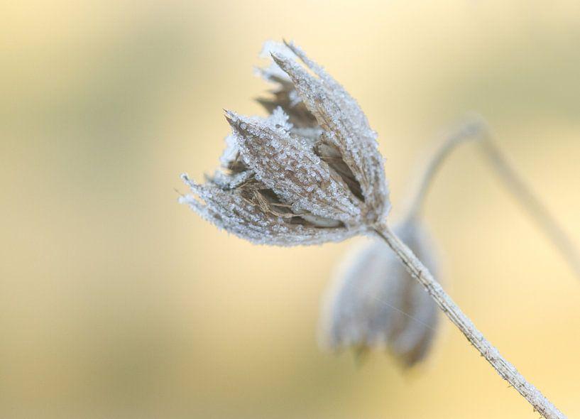 eenzaamheid in de winter van Sandra Keereweer