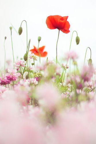 Mohnblumen auf dem Feld von Bob Daalder