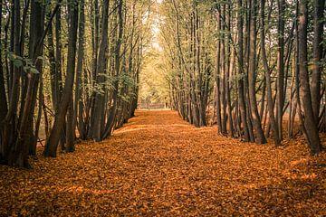 Magischer Wald von Patrick Herzberg