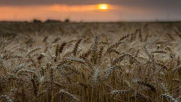 Graan bij zonsondergang van Jenco van Zalk
