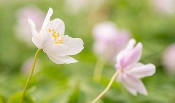 Die Frühlingszeit von Joris Pannemans - Loris Photography
