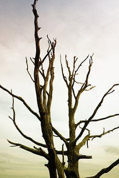 Macaber bladerloos boom van Jan Brons